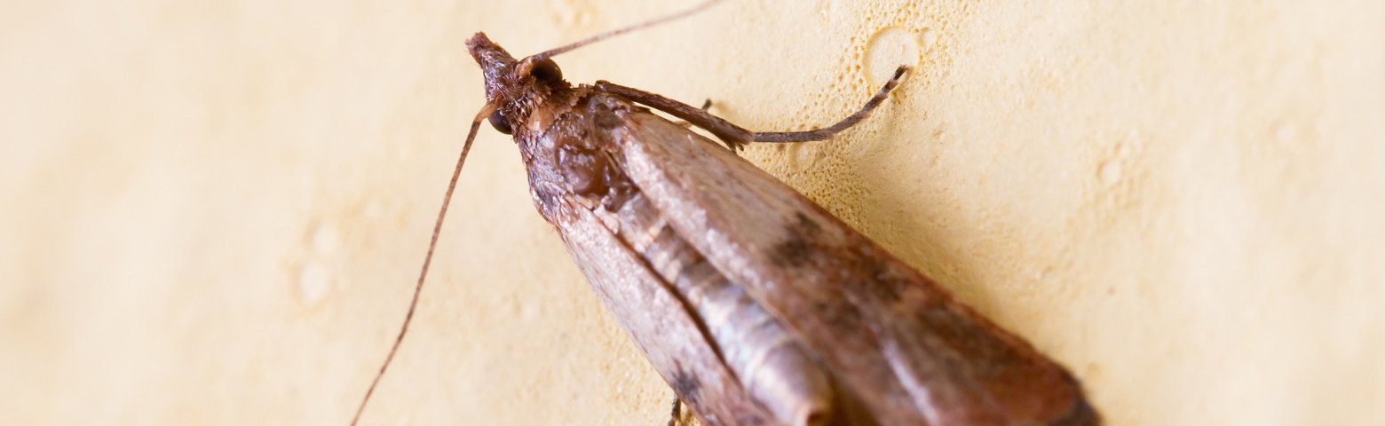 Insectes Alimentaires