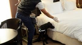 Détection Canine de Punaises de lit